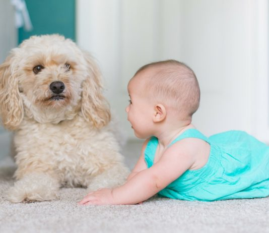 Baby und Hund? Das solltest du unbedingt wissen