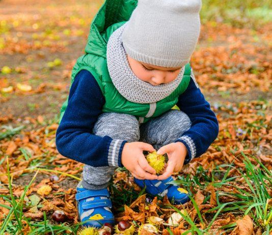 Kind sammelt Kastanien
