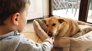Kind füttert Hund mit Leckerli