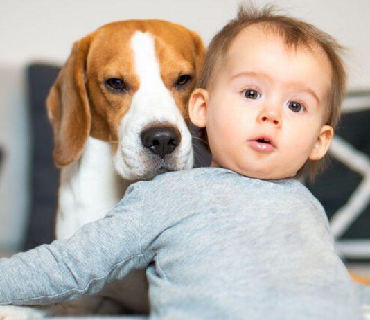 Haustiere für Kinder: Junge mit Hund