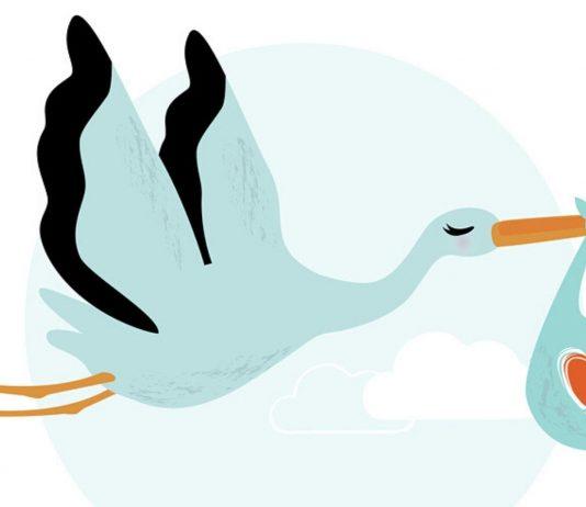 Klapperstorch bringt ein Baby: Daher hat Klapperstorchtee seinen Namen