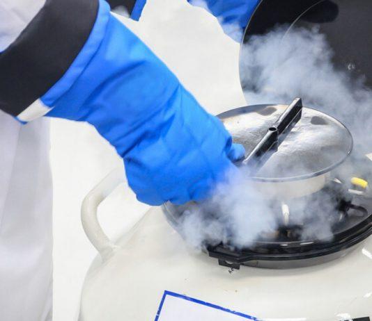 Beim Social Freezing werden Eizellen eingefroren, um ihre Qualität und Fruchtbarkeit zu erhalten.