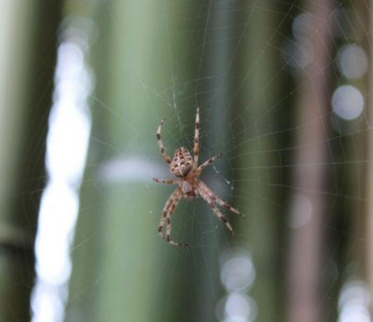 Spinnen lösen bei vielen Menschen Ekel oder Ängste aus