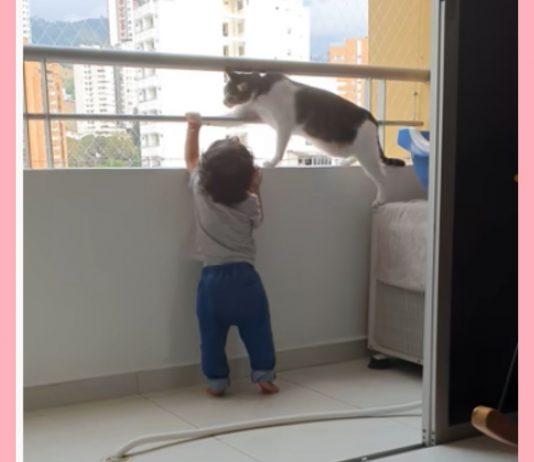 Cool Cat: Die Katze versucht, ihr kleinstes Herrchen vor einem Unglück zu bewahren.
