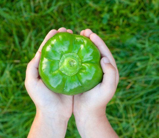 Paprika fürs Baby? Grundsätzlich ist das Gemüse für Kleinkinder ungefährlich.